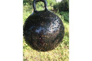 Horse Fly Trap Ball dazenval