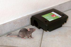 Kerbl ratten voerdoos Beta