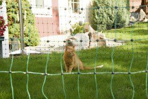 Kerbl kattenafrastering