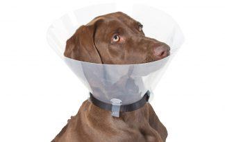 Kerbl kunststof hondenkraag