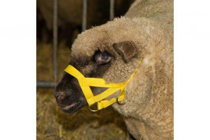 Kerbl geiten- en schapenhalster nylon