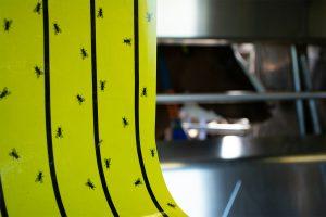 Knock Off FlyRoll vliegenkleefrol geel