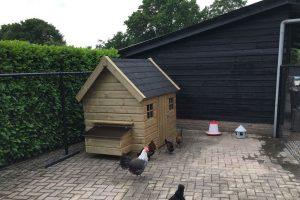 Maatwerk kippen nachthok huismodel