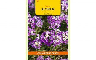 Oranjeband Zaden alyssum Royal Carpet