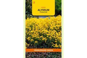 Oranjeband Zaden alyssum saxatile Compactum