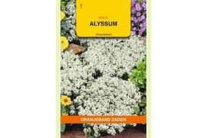 Oranjeband Zaden alyssum Sneeuwkleed