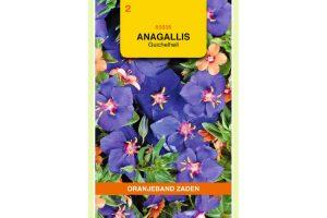 Oranjeband Zaden anagallis arvensis Blauw