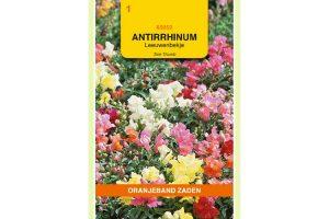 Oranjeband Zaden antirrhinum majus Tom Thumb