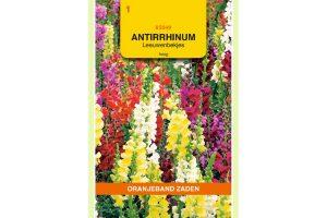 Oranjeband Zaden antirrhinum maximum gemengd