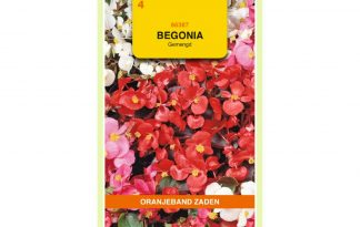 Oranjeband Zaden begonia semperflorens gemengd
