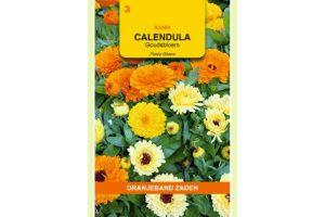 Oranjeband Zaden calendula officinalis Fiesta Gitana gemengd