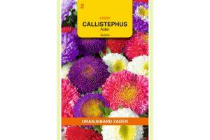 Oranjeband Zaden callistephus chinensis Rubens gemengd