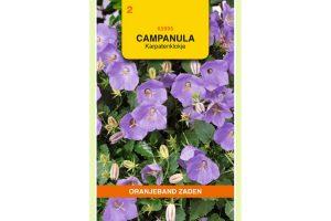 Oranjeband Zaden campanula carpatica blauw
