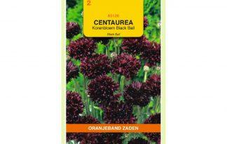 Oranjeband Zaden centaurea cyanus Black Ball