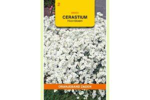 Oranjeband Zaden cerastium biebersteinii Wit