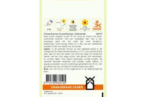 Oranjeband Zaden chrysanthemum leucanthemum Meikoningin
