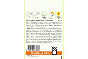 Oranjeband Zaden chrysanthemum leucanthemum Silver Princess