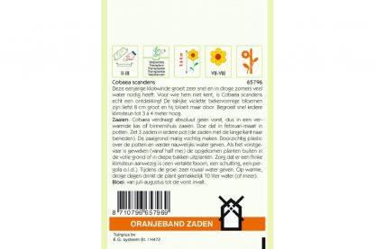 Oranjeband Zaden cobaea scandens Violet