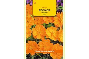 Oranjeband Zaden cosmos sulphureus Sunset oranjerood