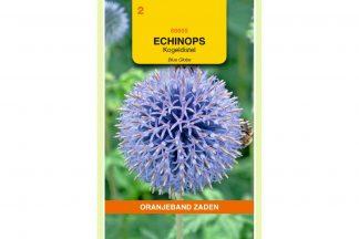 Oranjeband Zaden echinops ritro Blue Globe