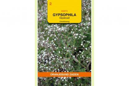 Oranjeband Zaden gypsophila paniculata Enkelbloemig