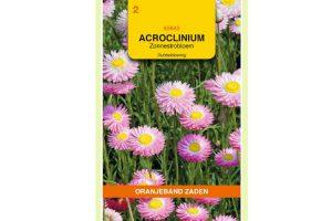 Oranjeband Zaden acroclinium roseum Dubbelbloemig