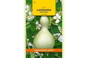 Oranjeband Zaden lagenaria siceraria Giant Bottle