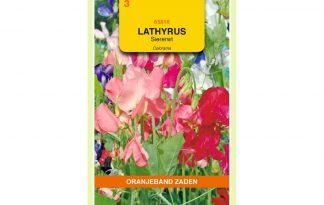 Oranjeband Zaden lathyrus odoratus Colorama gemengd
