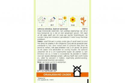 Oranjeband Zaden lathyrus odoratus Spencer gemengd