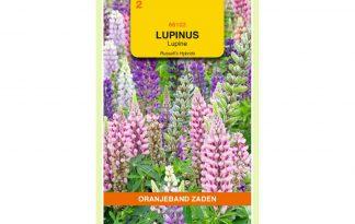 Oranjeband Zaden lupinus polyphyllus Russell's Hybrids