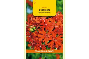 Oranjeband Zaden lychnis chalcedonica Rood
