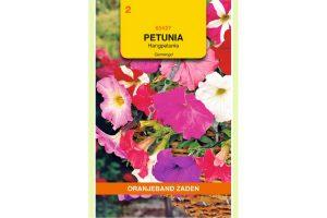 Oranjeband Zaden petunia hybride pendula gemengd