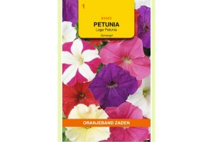 Oranjeband Zaden petunia nana compacta Gemengd