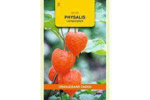 Oranjeband Zaden physalis franchetti gigantea