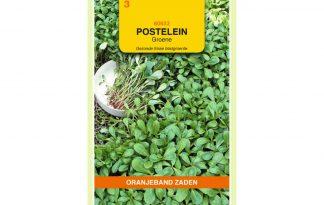 Oranjeband Zaden postelein Groene