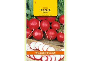 Oranjeband Zaden radijs Saxa 2
