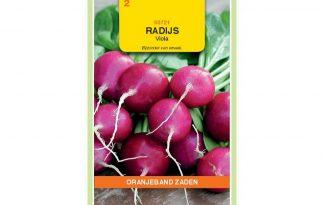 Oranjeband Zaden radijs Viola paars