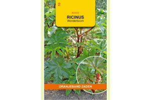 Oranjeband Zaden ricinus communis Wonderboom