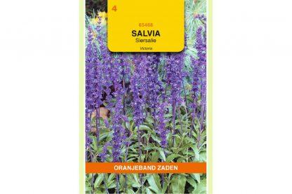 Oranjeband Zaden salvia farinacea Victoria blauw