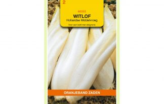 Oranjeband Zaden witlof Hollandse Middelvroeg