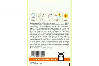 Oranjeband Zaden zinnia elegans Dahliabloemig gemengd