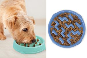 Outward Hound Fun Feeder Slo-Bowl