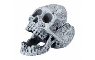 Trixie schedel