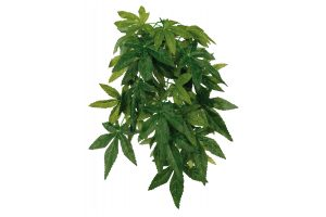 Trixie Abutilon zijden hangplant
