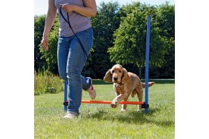 Trixie Dog Activity Agility horde