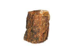 Natuursteen - Versteend hout