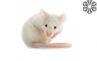 Diepvries muizen